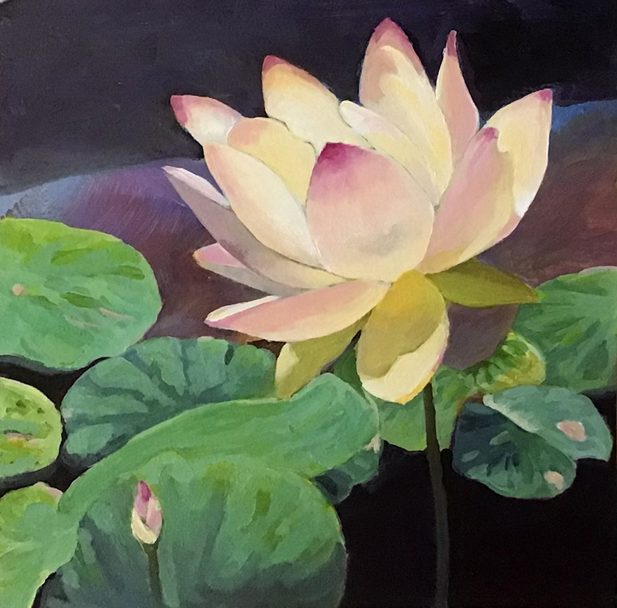 Single water lily, Biltmore Gardens, M. Hendry
